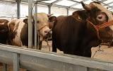 2021 kurbanlık koyun fiyatları kilosuna kaç paradan başlıyor?